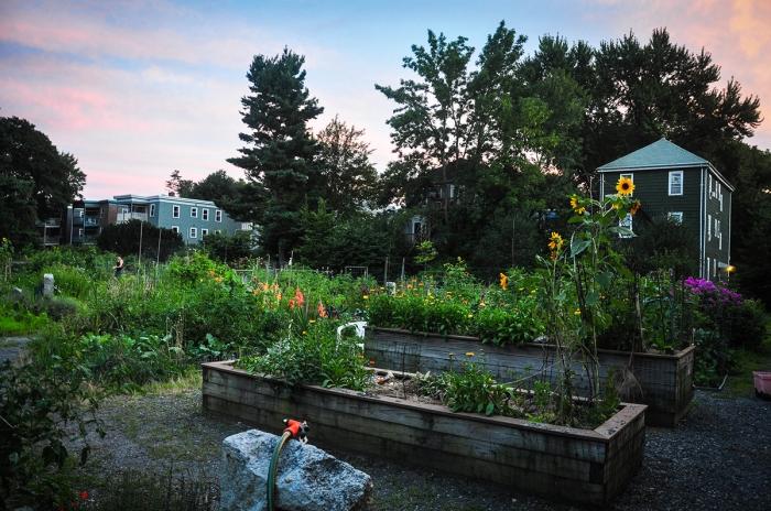 Boston Community Garden