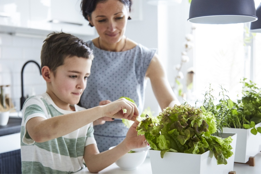 7 Simple Ways To Make Your Home More Green